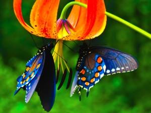 Beautiful_cool_butterfly_Wallpaper-1024x768 (1)