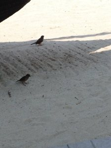 bird in the sand