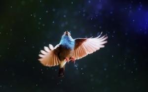 twisting bird