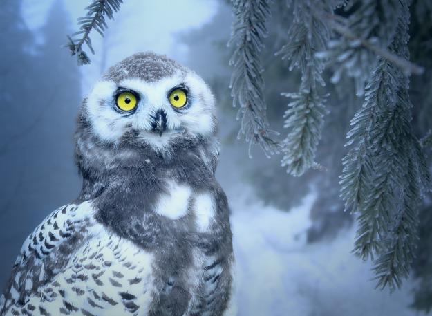 owl-3184032_1280