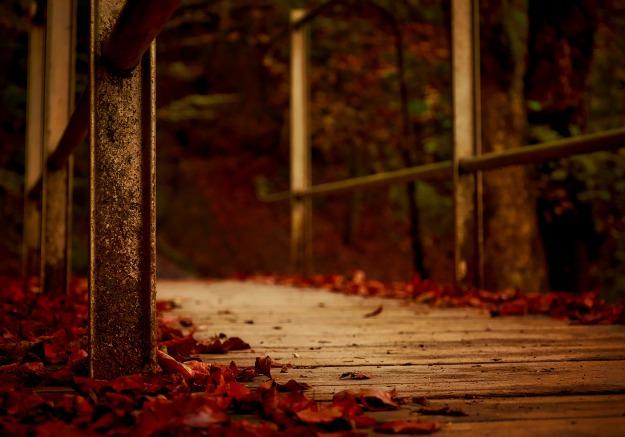 autumn-1768710_1920