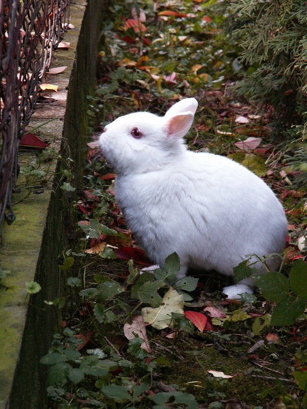 rabbit-94227_1280.jpg