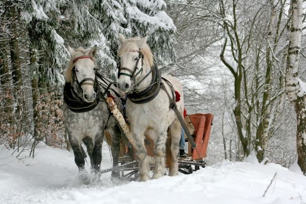 sleigh-ride-549727_1280.jpg