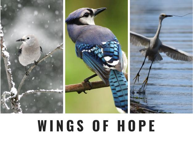Wings OfHope (1)